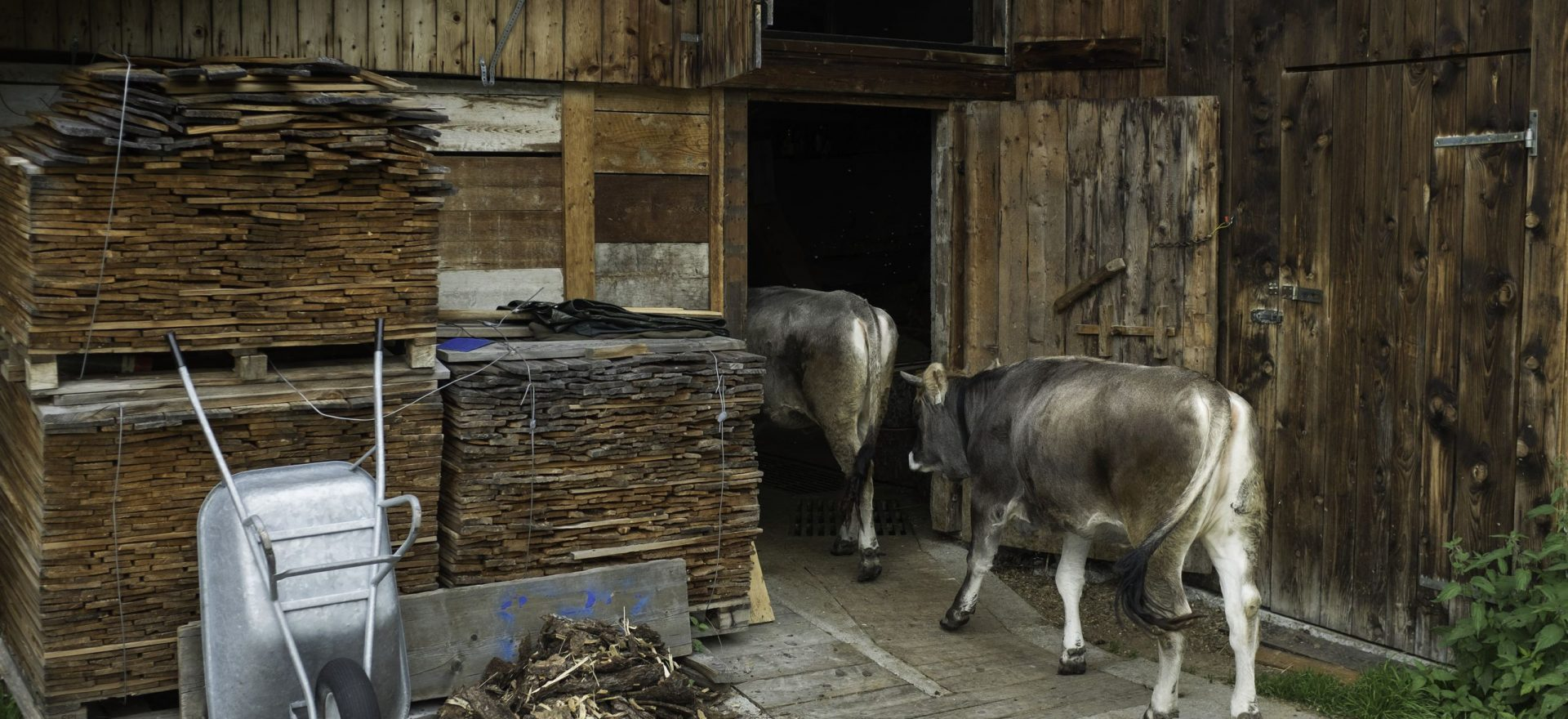 Stall Kühe Neustift im Stubaital