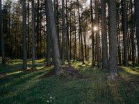 Mooswald © Tirol Werbung