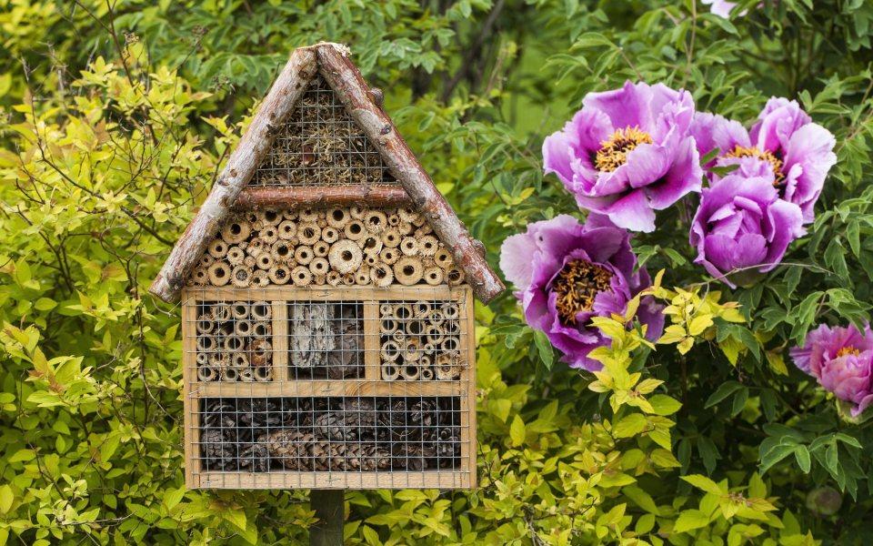 Bienenhotel © element3