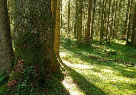 Waldbaden © Harald Löffel